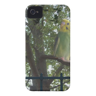 Parakeet iPhone 4 Covers