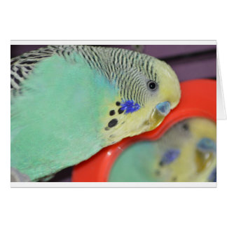 Parakeet looking in mirror card