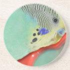Parakeet looking in mirror coaster