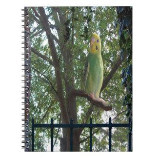 Parakeet Notebook