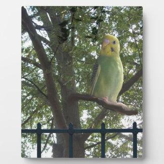 Parakeet Plaque
