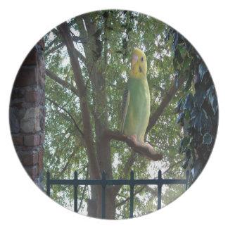 Parakeet Plate