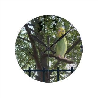 Parakeet Round Clock