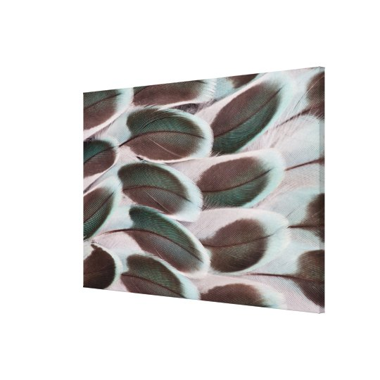 Parakeet Wing Feather Design Canvas Print