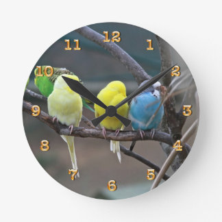 Parakeets Budgies Parrots | Birds Photo Nature Round Clock