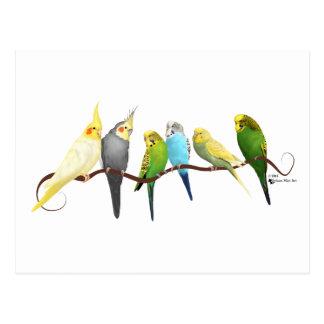 Parakeets & Cockatiels! Postcard