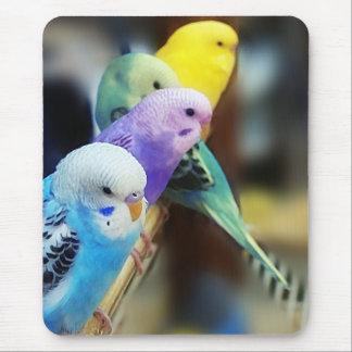 Parakeets mousepad