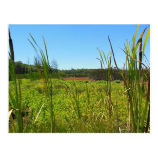 Parc d'état d'Annadel de marais de Ledson Santa Ro Carte Postale