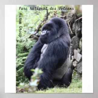 Parc National des Volcans, Hirwa Group Poster