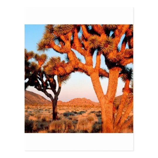 Park Sunrise Joshua Tree Monument California Postcard