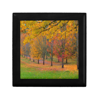 Park with tree lined maple trees in peak fall colo gift box