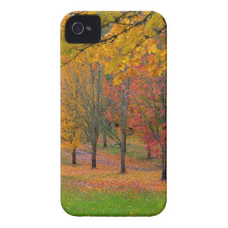 Park with tree lined maple trees in peak fall colo iPhone 4 case