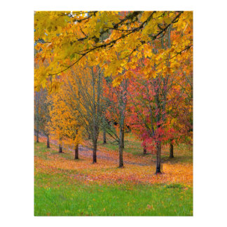 Park with tree lined maple trees in peak fall colo letterhead