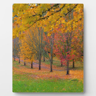 Park with tree lined maple trees in peak fall colo plaque