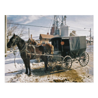 Parked Horse and Buggy Postcard