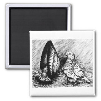 Parlor Roller Pigeons Square Magnet
