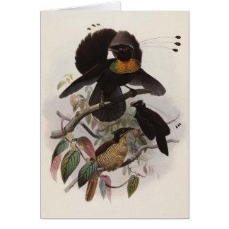 Parotia sexpennis - Six-shafted Bird Of Paradise Card