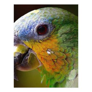 Parrot Amazon Animals Bird Green Exotic Bird Letterhead