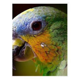 Parrot Amazon Animals Bird Green Exotic Bird Postcard