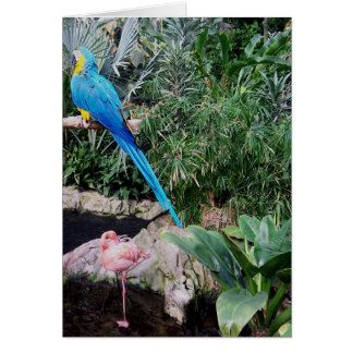Parrot and Flamingo Card