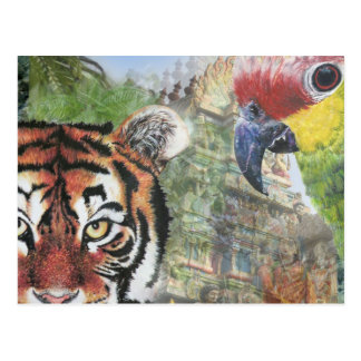 Parrot and tiger postcard