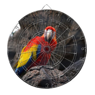 Parrot Bird Papużka Pet Ara Wings Beak Animal Dartboard