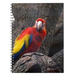 Parrot Bird Papużka Pet Ara Wings Beak Animal Notebooks