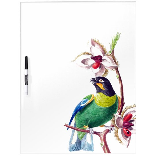 Parrot Bird Wildlife Animal Dry Erase Board