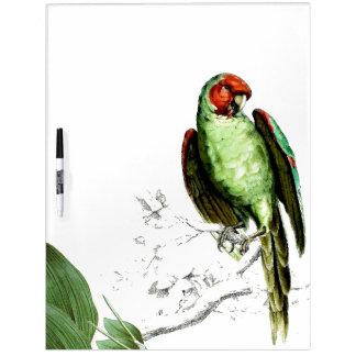 Parrot Bird Wildlife Animals Dry Erase Board