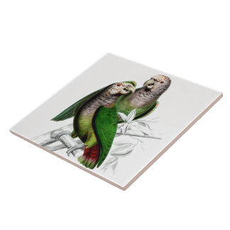 Parrot Birds Wildlife Animal Leaves Tile