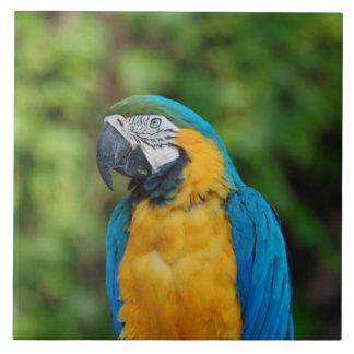 Parrot Ceramic Photo Tile