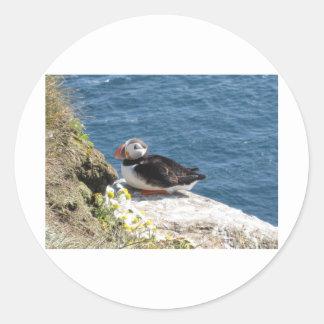 Parrot diver classic round sticker