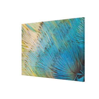 Parrot Feather Abstract Close Up Canvas Print
