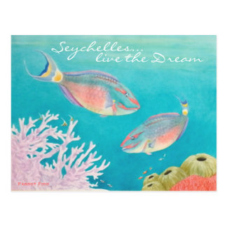 Parrot Fish Postcard
