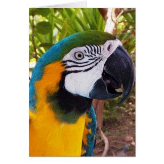 Parrot Head Card