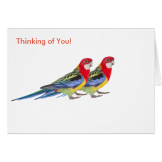 Parrot image for Greeting card