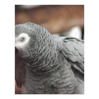 Parrot Letterhead