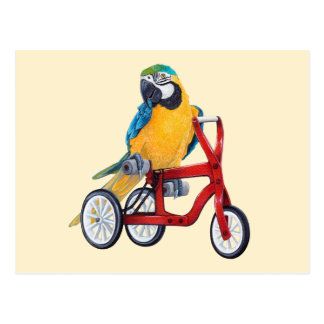 Parrot Macaw on Tricycle bike Postcard
