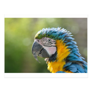 Parrot or Macaw Head Postcard