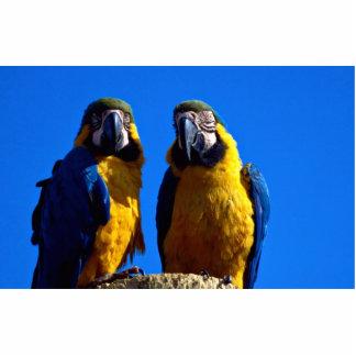 Parrot pair cut out