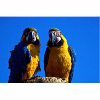 Parrot pair photo sculptures