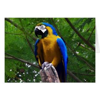 Parrot Pose ~ Card