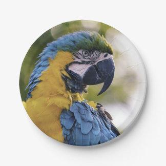 Parrot Profile Portrait Photograph Paper Plate