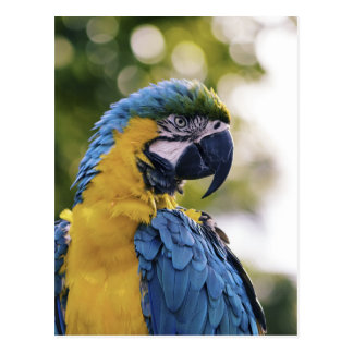 Parrot Profile Portrait Photograph Postcard