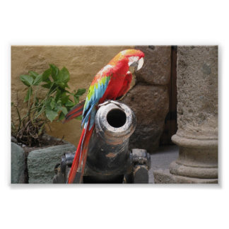 Parrot Sitting on Cannon Poster