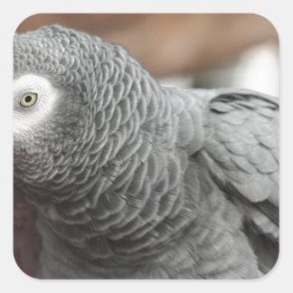 Parrot Square Sticker