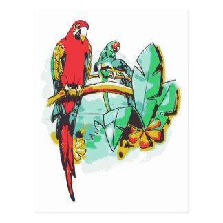Parrot Trio Postcard