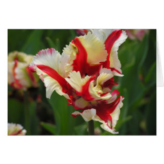 Parrot tulip card (blank)