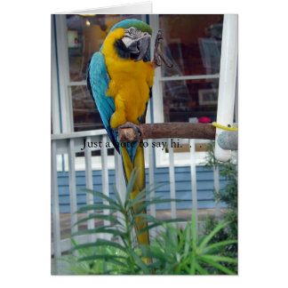 Parrot Waving Hello Card- Just a note to say hi... Card