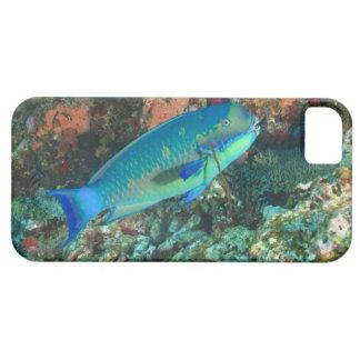 Parrotfish near Taveuni Island, Fiji, South Case For The iPhone 5